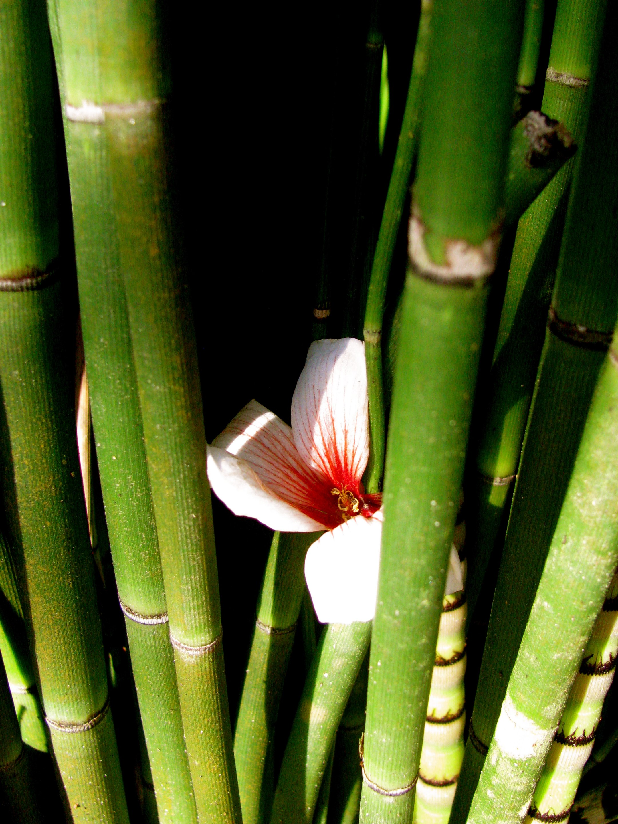 Flower in the bamboo